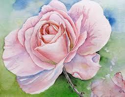 O'keefe rose for blog